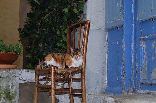 Catnap (c) Kristin Espinasse