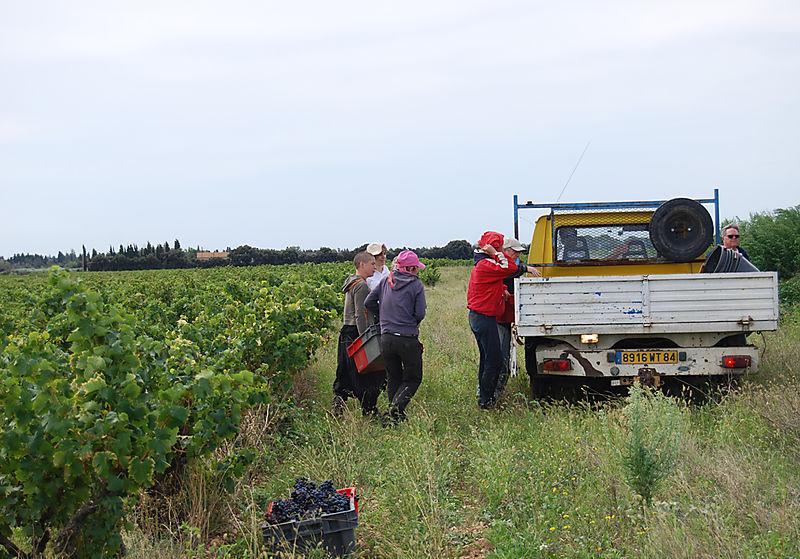 Grape-truck