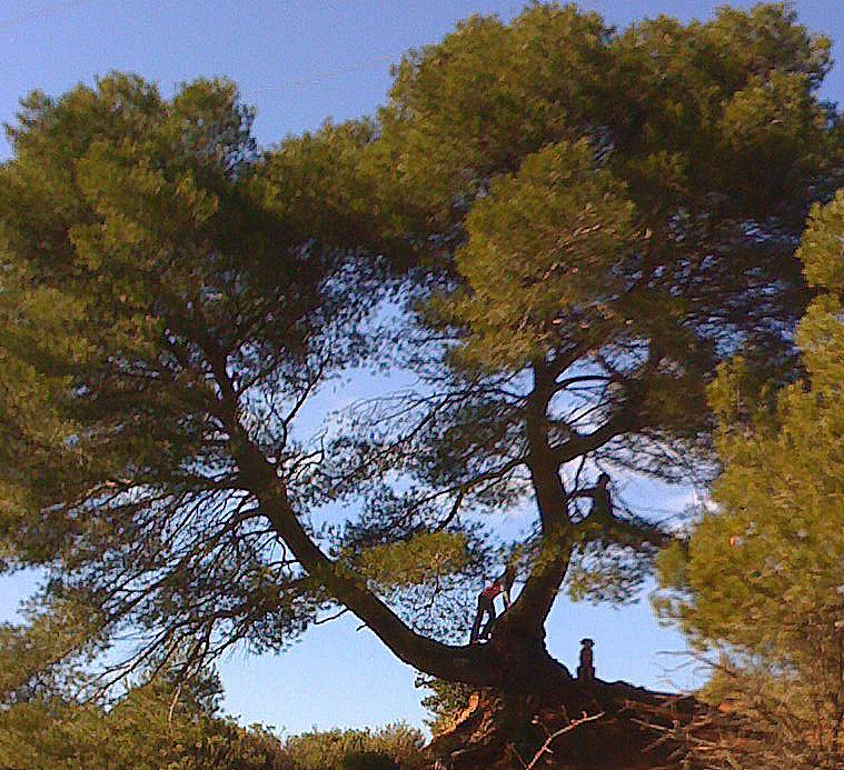 Tree2-1