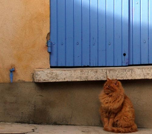 Cat in Vacqueras (c) Kristin Espinasse