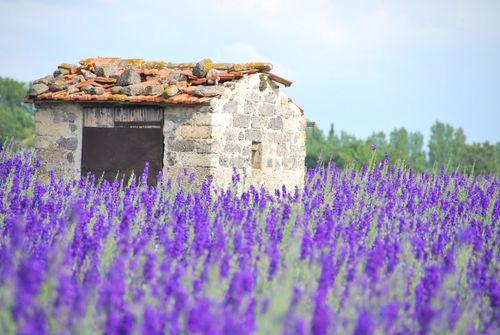 Cabanon & Flower Field (c) Kristin Espinasse