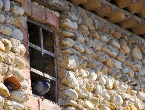 Pigeons (c) Kristin Espinasse. Photo taken in St. Maurice-sur-Eygues