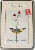 Cavallini birds