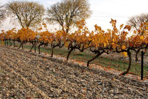 Vines (c) Kristin Espinasse