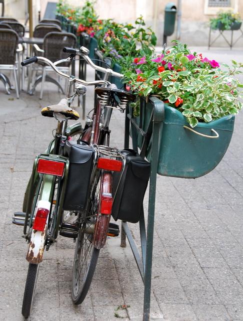 Betrothed Bikes (c) Kristin Espinasse