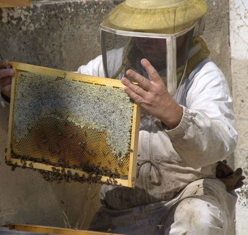 bees and the beekeeper (c) Kristin Espinasse