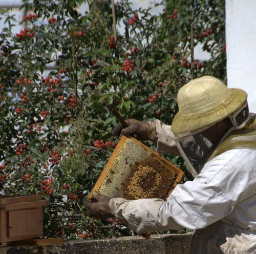 apiculteur or beekeeper and bees or abeilles (c) Kristin Espinasse
