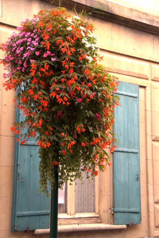 Municiple flowers