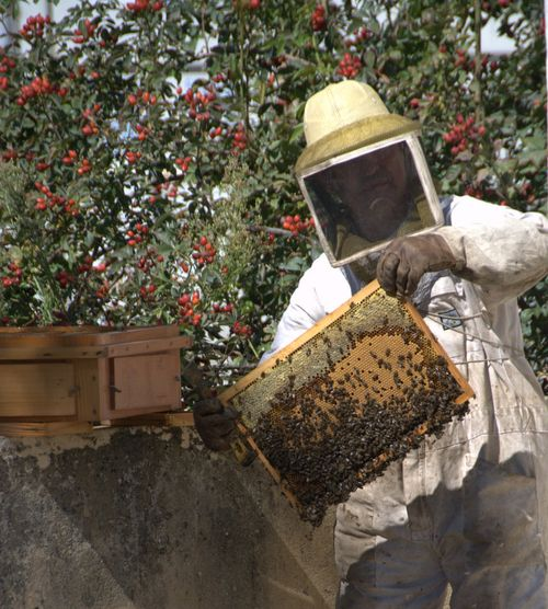 apiculteur and abeilles beekeeper and bees (c) Kristin Espinasse