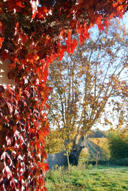 Autumn in the Rhone