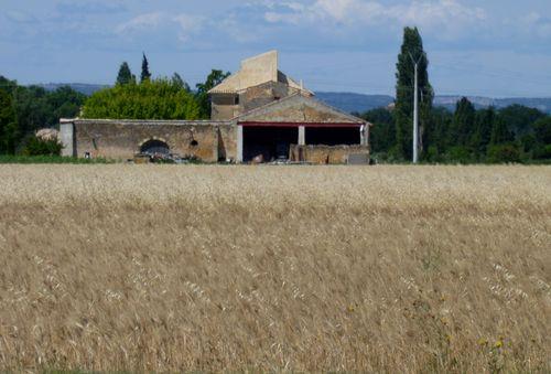 Wheat Farm (c) Kristin Espinasse