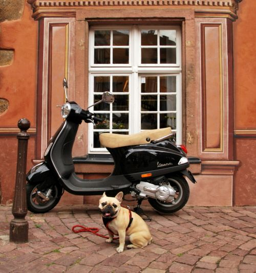 Dog Days in Alsace (c) Kristin Espinasse