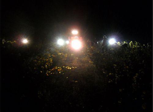Night Harvest (c) Collin Wagner