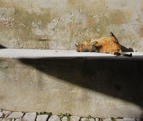 Mama Cat in Seguret (c) Kristin Espinasse