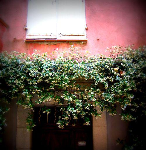 Jasmine Window (c) Kristin Espinasse