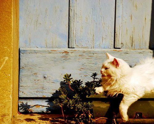 cat in camaret (c) Kristin Espinasse