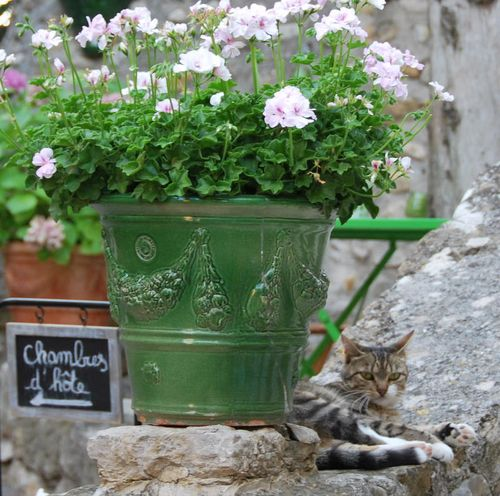 Pot of Flowers & Cat (c) Kristin Espinasse