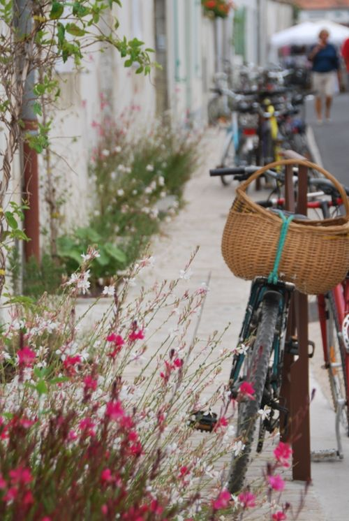 I love bikes and flowers and baskets (c) Kristin Espinasse