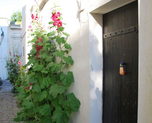 Hollyhocks and door knocks (c) Kristin Espinasse