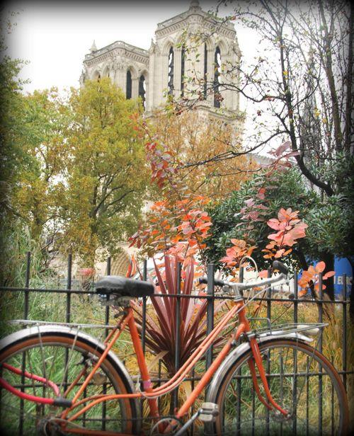 Notre Dame (c) Kristin Espinasse