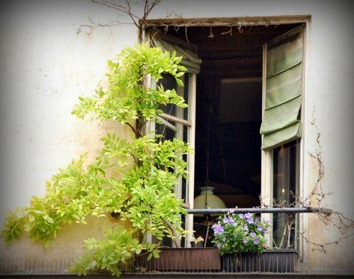 Paris window (c) Kristin Espinasse