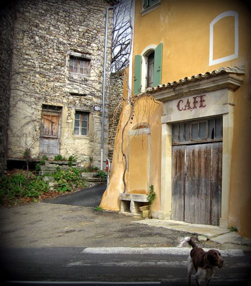 Spaniel and cafe (c) Kristin Espinasse