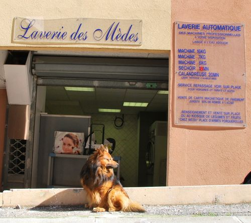 Island dog and laundromat on Porquerolles (c) Kristin Espinasse