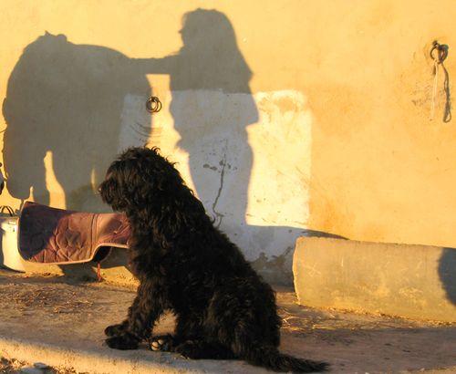 French dog in Tulette, France (c) Kristin Espinasse