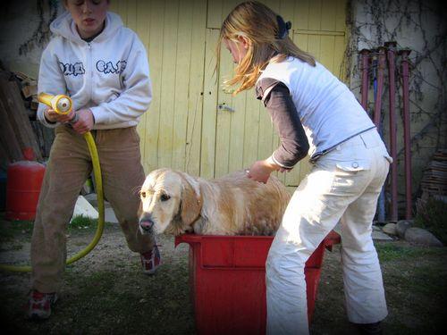 The Dog Wash (c) Kristin Espinasse