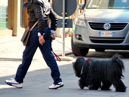 Italian dog in Sauve, Italy (c) Kristin Espinasse