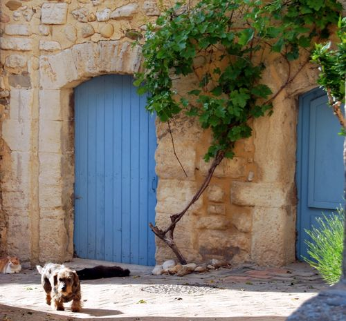 French dog and cats in Visan (c) Kristin Espinasse