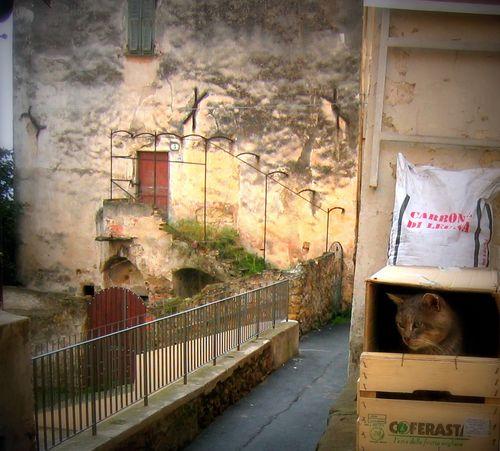 cat in a box (c) Kristin Espinasse