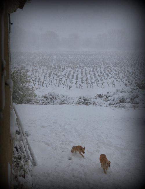 Snowy Vineyard (c) Kristin Espinasse