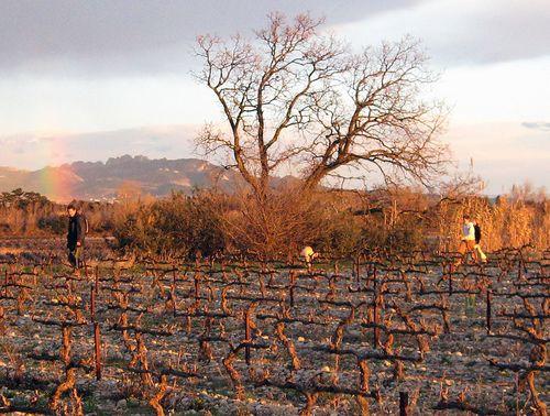 Rainbow over the vines (c) Kristin Espinasse