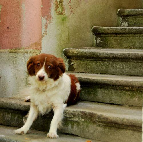 Croatian dog (c) Kristin Espinasse