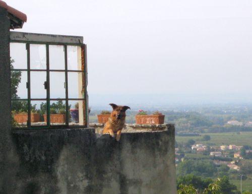 French dog in Seguret (c) Kristin Espinasse