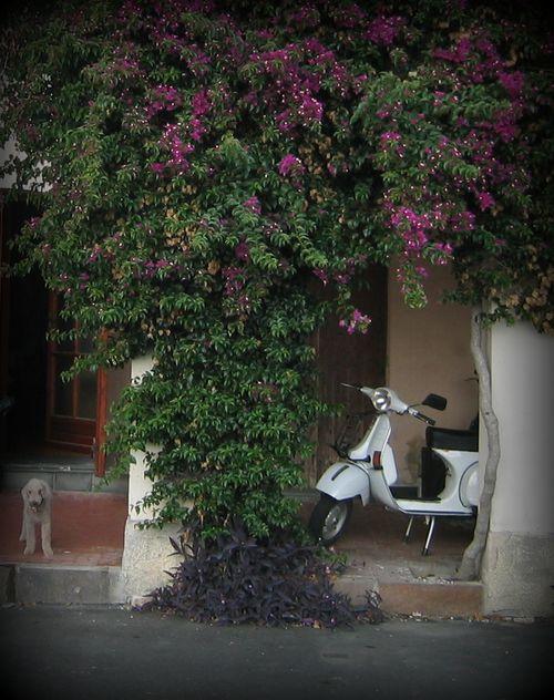 Italian dog in Ventimillie (c) Kristin Espinasse