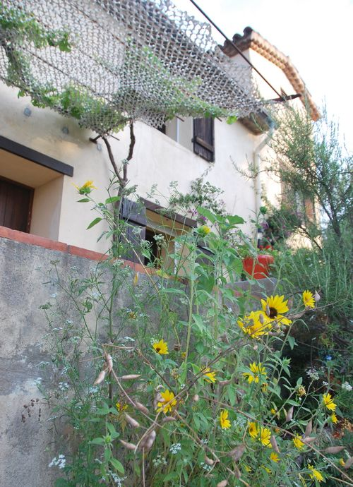 sunflowers old french farmhouse mas in st cyr-sur-mer france