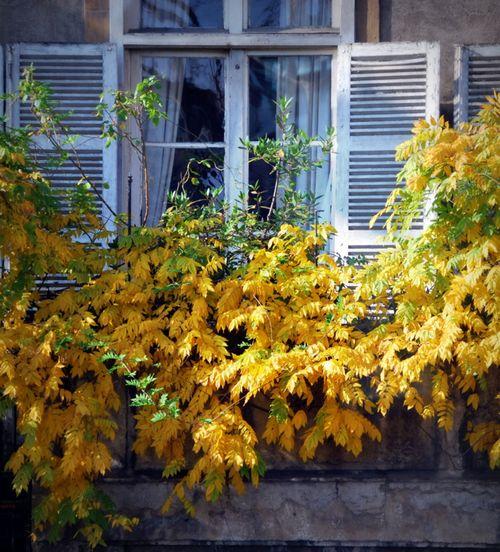 Autumn in Lyon (c) Kristin Espinasse