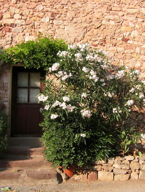 Door and oleanders in Le Vieux Cannet, France (c) Kristin Espinasse