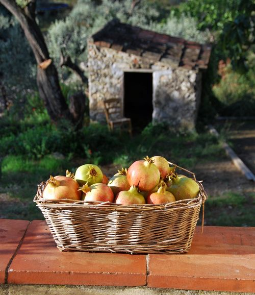 pomegranate, grenadier, basket, cabanon, rush-bottom chair, and olive trees in France (c) Kristin Espinasse, www.french-word-a-day.com