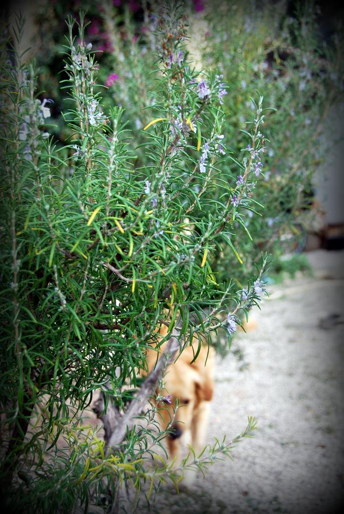 Rosemary and smokey