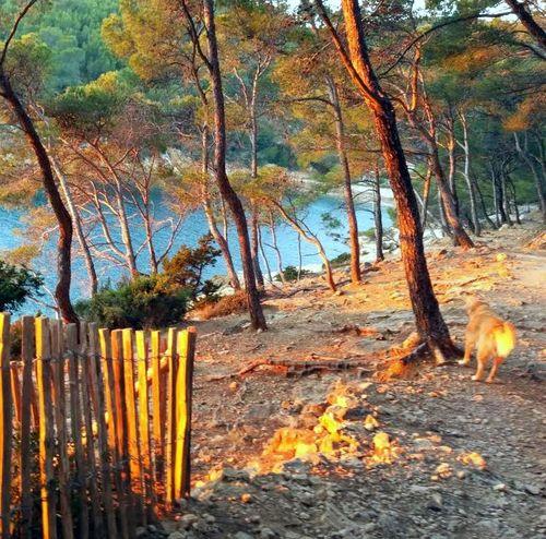 1-coucher du soleil - smokey