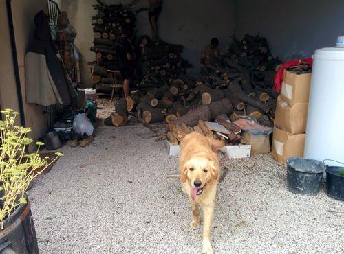 Garage garden room