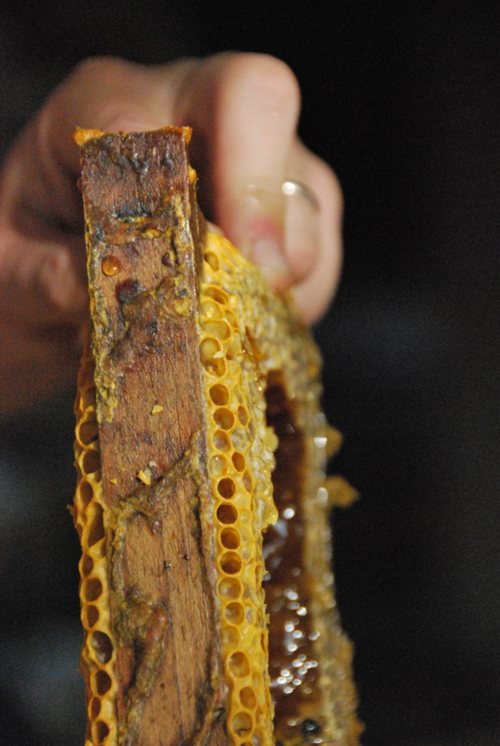 ruche honeycomb beekeeping