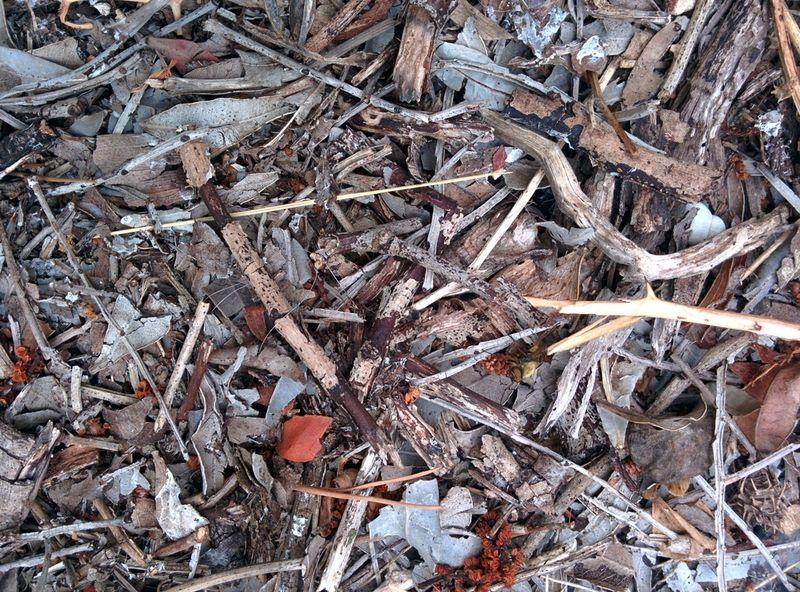 Brindilles or twigs