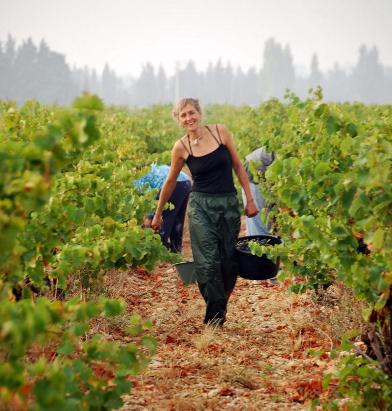 Harvesting grapes at Domaine Rouge-Bleu