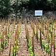 Sign at Mas des Brun vineyard