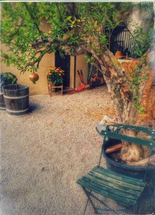 Pomegranat tree