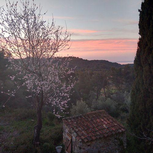 Almond-blossoms-landscape